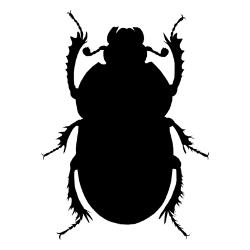 Carpet Beetles Exterminator Los Angeles
