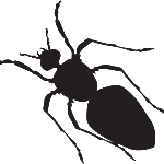 carpenter-ant-150x150
