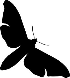 moth-268x300
