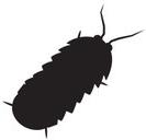 pill-bug